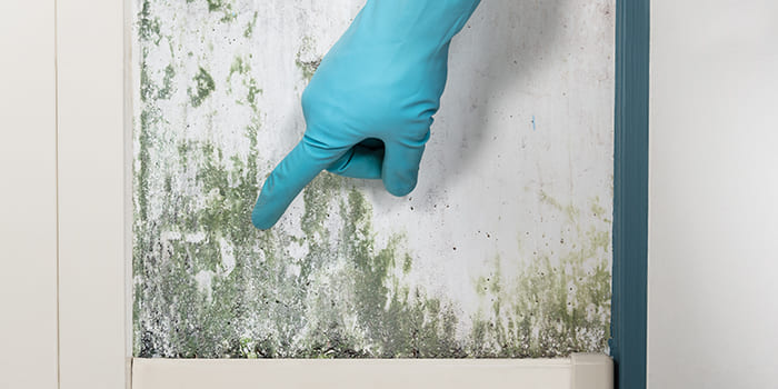 Blog - How can you combat mould on the wall?