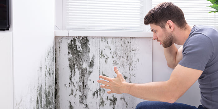 Blog - What are the consequences of damp in the house?