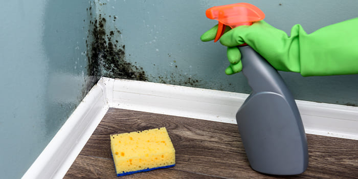 Blog - What is black mould and where does it come from?