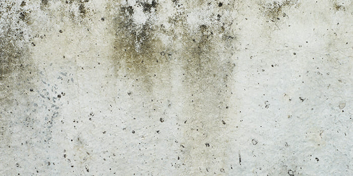 Blog - How can you recognize damp in the house?